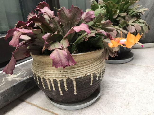 不適合勤澆水的6種花,澆多了,就黃葉! 第5张