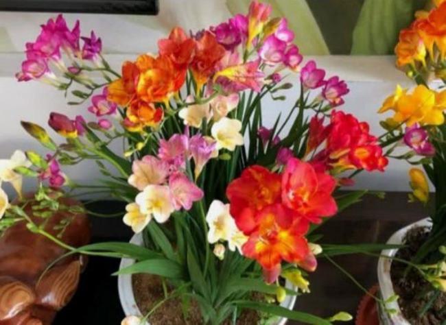 能夠凈化空氣的幾種植物花卉,吸甲醛二手煙,家中必備 第1张