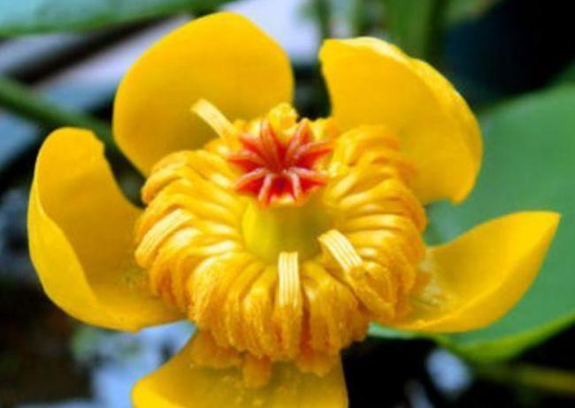 能夠凈化空氣的幾種植物花卉,吸甲醛二手煙,家中必備 第3张