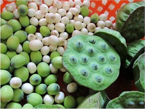 水生植物荷葉不僅果實好吃 連根和梗都是餐桌上的美味 第3张