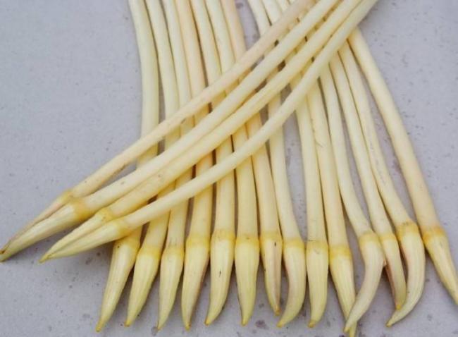 水生植物荷葉不僅果實好吃 連根和梗都是餐桌上的美味 第5张