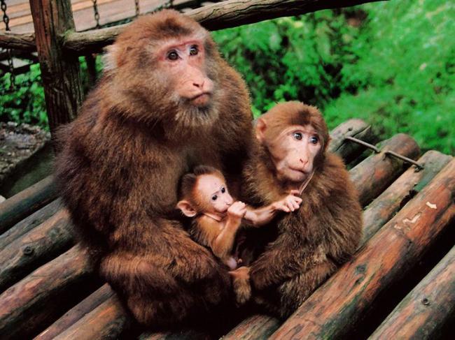 屬猴人:生肖猴不要太過於執著,面對壓力提前做好準備 第5张