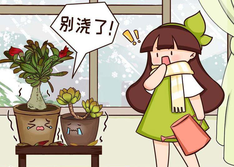 不適合勤澆水的6種花,澆多了,就黃葉! 第1张