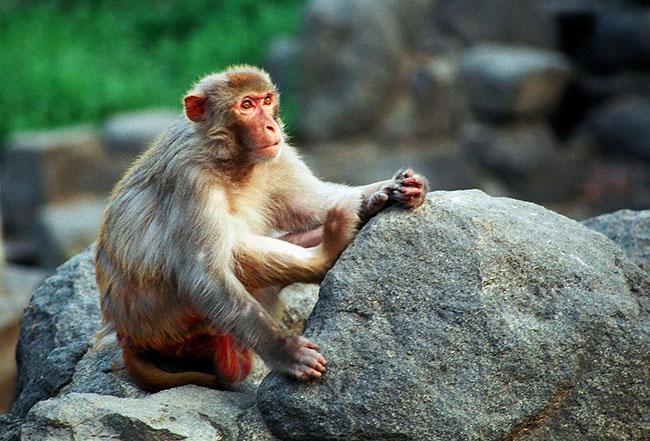 屬猴人:生肖猴不要太過於執著,面對壓力提前做好準備 第1张