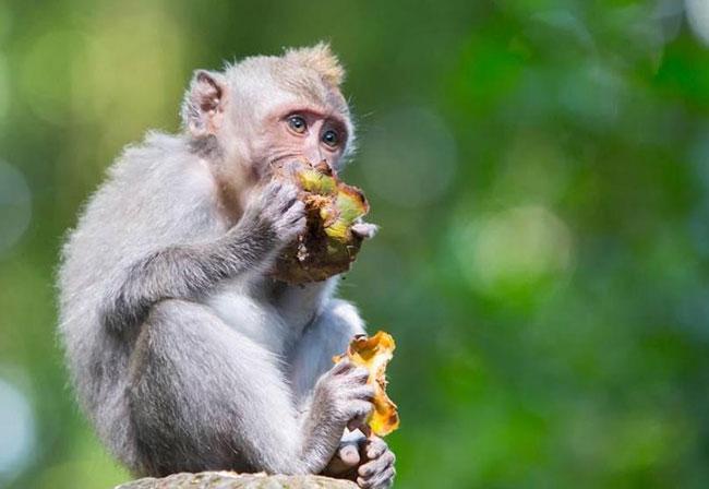 屬猴人:生肖猴不要太過於執著,面對壓力提前做好準備 第4张
