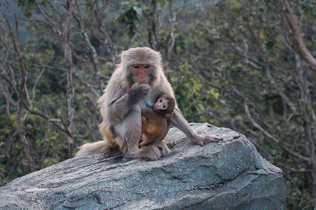 屬猴人:生肖猴不要太過於執著,面對壓力提前做好準備 第3张