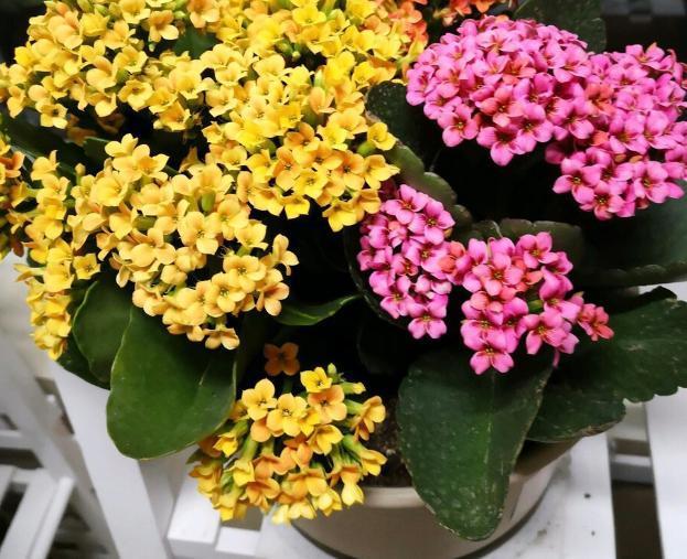 蛋殼用正確的處理方法拿來養花,花草長得旺還多開花 第4张