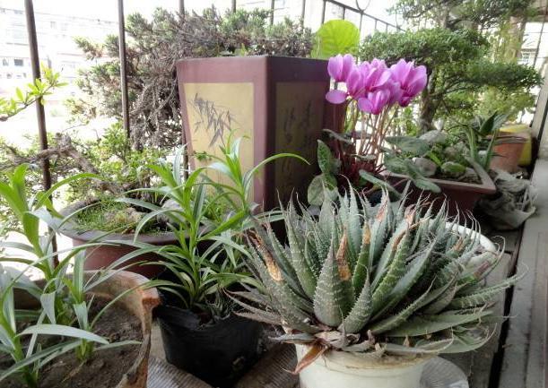 蛋殼用正確的處理方法拿來養花,花草長得旺還多開花 第6张
