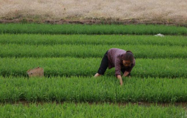 在外國人看來,中國人的勤勞實在是太可怕了 第4张