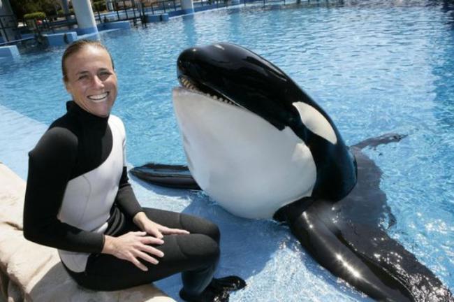 美國女馴獸師道恩被她照顧了16年的虎鯨拖下水咬死 第4张
