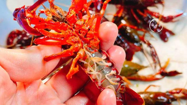 吃小龍蝦時都要把頭全部撇掉,看下蝦頭都有哪些器官 第4张