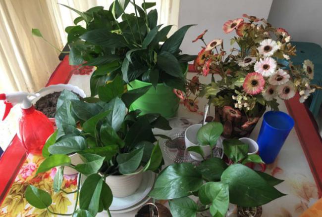 居家養花,新人老手總愛做錯的幾件事 第5张