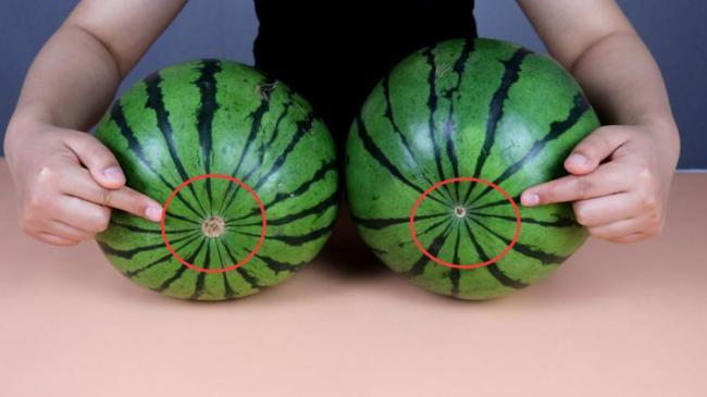 教你分辨西瓜的公母,保證挑到又好又甜又起沙的西瓜 第4张