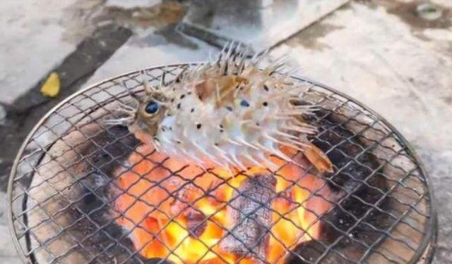 河豚丟在火爐上烤著吃,致命毒素被忽略了嗎? 第3张