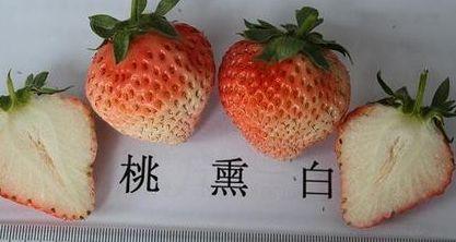 最好吃的草莓品種都在這裏,你吃過幾種? 第6张