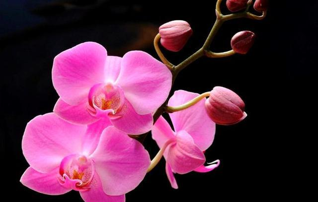 蝴蝶蘭花種植,記住這幾種方式,蝴蝶蘭長得很茂盛 第2张
