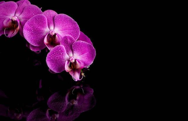 蝴蝶蘭花種植,記住這幾種方式,蝴蝶蘭長得很茂盛 第5张