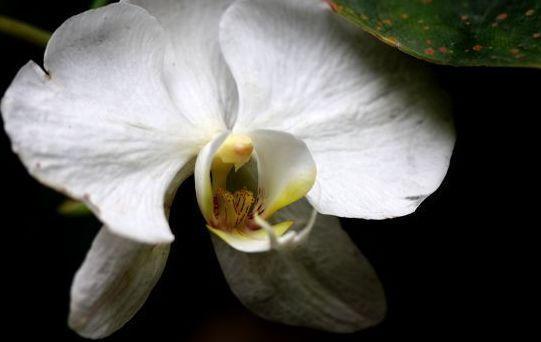 蝴蝶蘭花種植,記住這幾種方式,蝴蝶蘭長得很茂盛 第6张