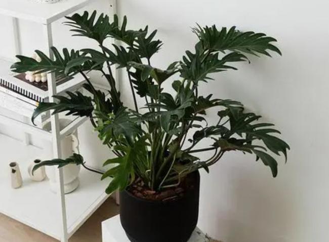 室內盆栽養花,空氣太幹燥會出問題,該怎麽解決? 第2张