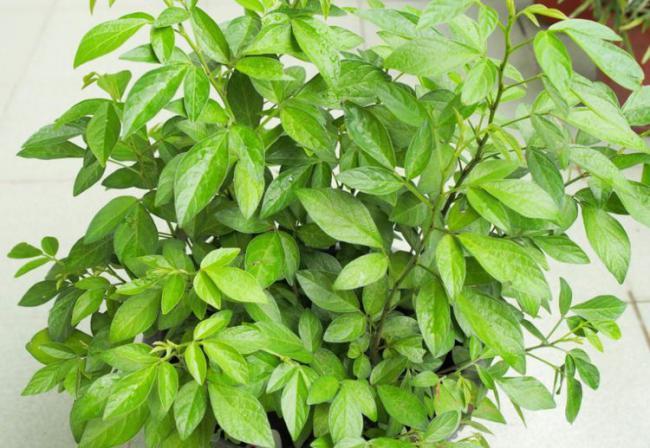 室內盆栽養花,空氣太幹燥會出問題,該怎麽解決? 第3张