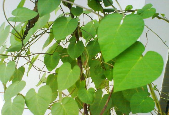 室內盆栽養花,空氣太幹燥會出問題,該怎麽解決? 第4张