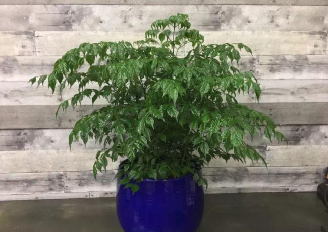 室內盆栽養花,空氣太幹燥會出問題,該怎麽解決? 第6张