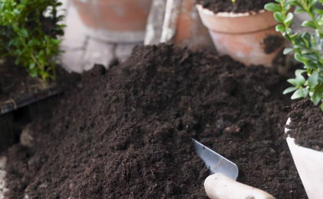 """養花用土往裏頭加些""""料"""",生長迅速狀態好 第3张"""