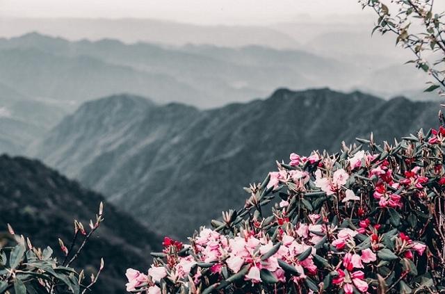 """貴州銅仁梵凈山,被譽為""""地球綠洲"""",風景秀麗 第2张"""