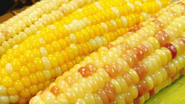 按這個方法煮玉米,真的吃著更軟糯,聞著更清香 第1张