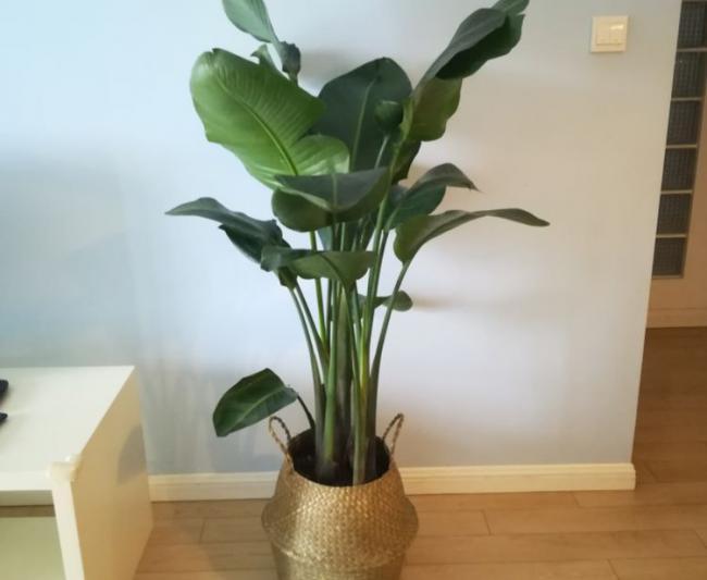 夏天滿足這4大要素室內花草盆栽才不容易黃葉 第1张