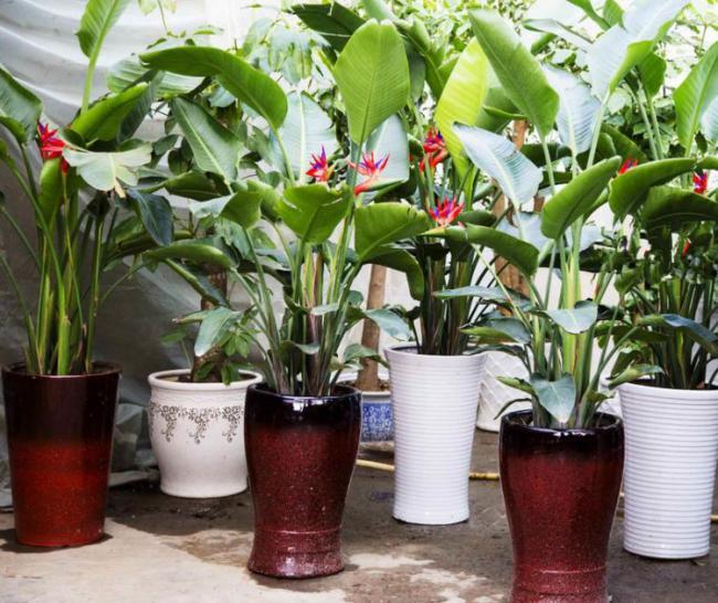 夏天滿足這4大要素室內花草盆栽才不容易黃葉 第2张