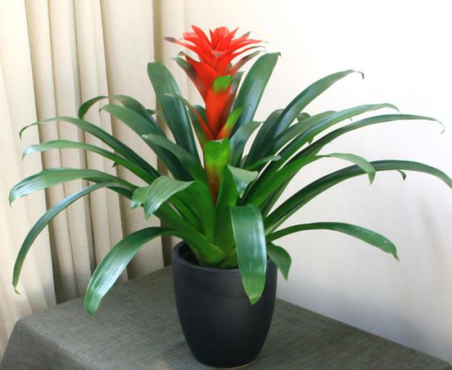 夏天滿足這4大要素室內花草盆栽才不容易黃葉 第3张