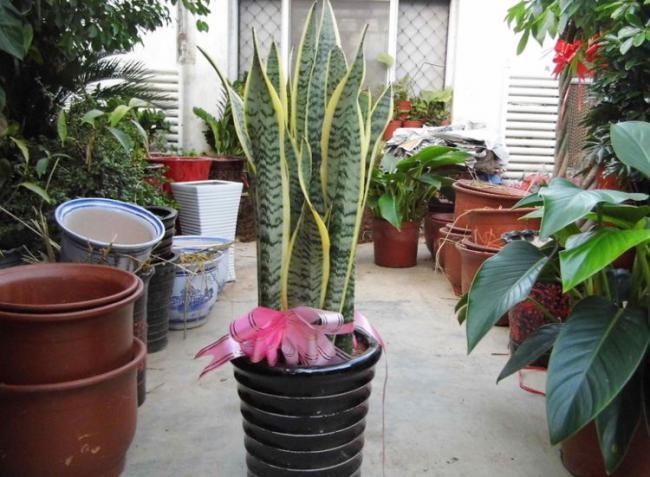 夏天滿足這4大要素室內花草盆栽才不容易黃葉 第5张