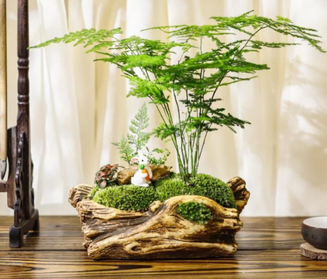 夏天滿足這4大要素室內花草盆栽才不容易黃葉 第6张